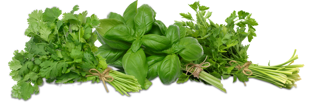 Growers express - Tips planting herbs lovage parsley dill ...